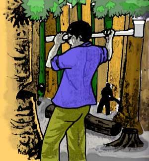 http://p2tel.or.id/wp-content/uploads/2013/06/kapak-vs-pohon.jpg